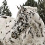 horse hay durban