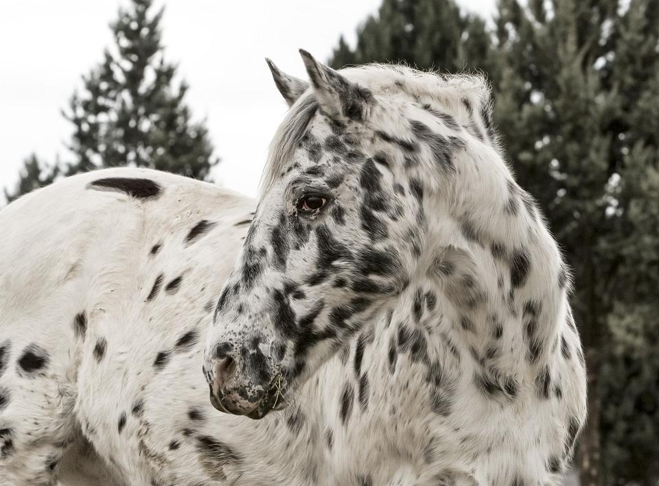 4 Summer Essentials For Horses